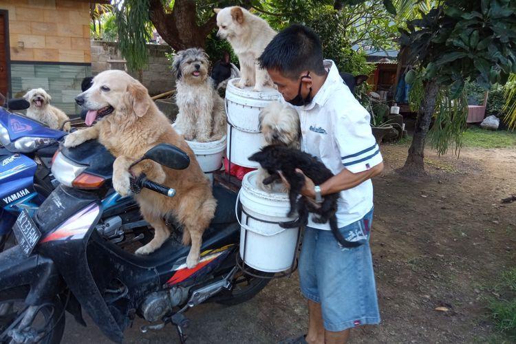 Pria di Bali bonceng enam anjingnya dengan motor bebek