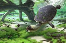 Kura-kura Unik Berwajah Katak Pernah Hidup di Bumi Jutaan Tahun Lalu