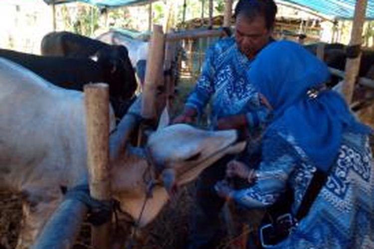 Tim pemeriksa kesehatan hewan tengah memeriksa hewan kurban di lokasi penjualan sapi di Singaparna, Jumat (4/10/2013).