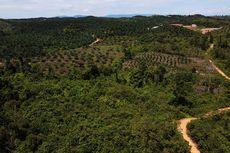 Kelapa Sawit Dituding Jadi Perusak Hutan, Ini Respon Pemerintah