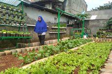 Warga Kebayoran Lama Selatan Ubah Tempat Pembuangan Sampah Jadi Kebun Sayur