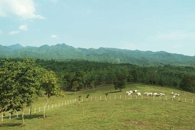 Tempat wisata Bukit Waruwangi di Kabupaten Serang, Banten.