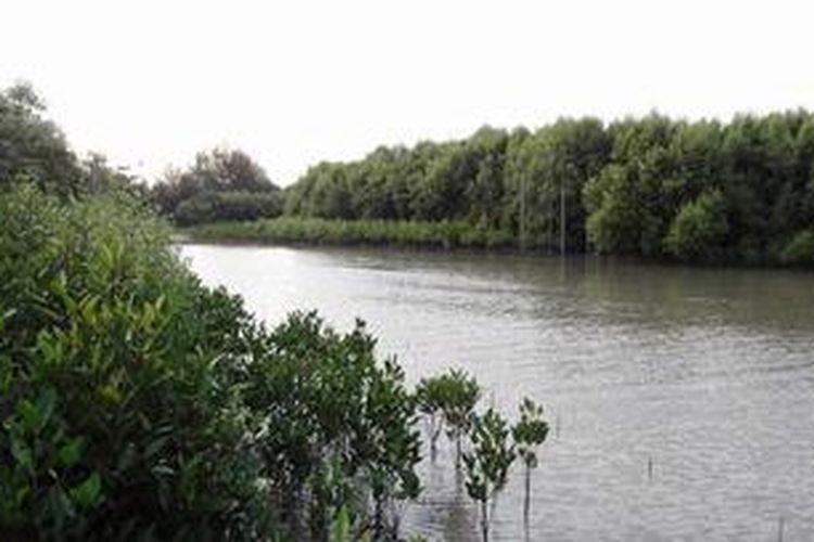 Kawasan wisata Sungai Nipah dengan lebatnya hutan mangrove. Gambar diambil pada 20 Desember 2012