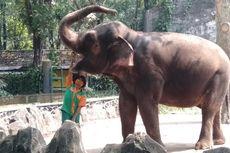 Ragunan Tutup, Wisatawan Diajak Lihat Satwa Lewat Instagram Live