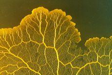 Soal UAS Biologi: Protista Mirip Jamur