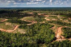 Disebut Bakar Hutan di Papua untuk Buka Lahan, Ini Respons Korindo