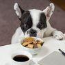 Mengendus Bisa Buat Anjing Bahagia, Mengapa?
