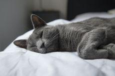 7 Arti Posisi Tidur Kucing, dari Telentang sampai Mirip Roti