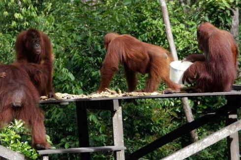 Kampanye Save Orangutan Tanjung Puting Lewat Simulasi Air Soft Gun