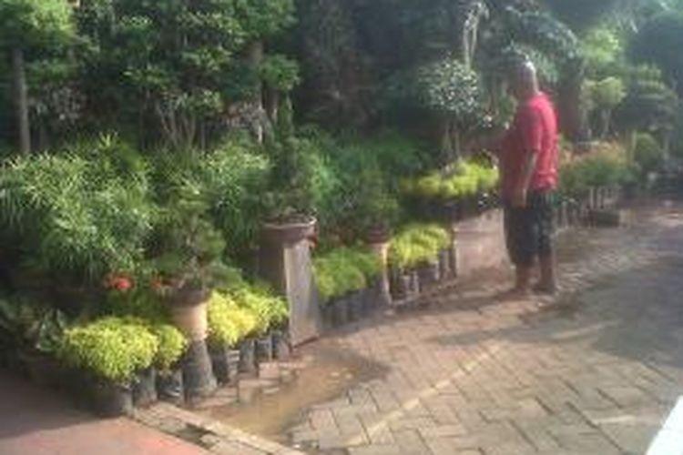 Pedagang tanaman hias tengah memundurkan tanamannya sejauh dua meter dari batas trotoar di Jalan Gerbang Pemuda, Senayan, Jakarta Pusat, Rabu (21/80/2013) sore.