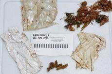 Terdampar, Bayi Lumba-lumba di Florida Telan Plastik dan Balon