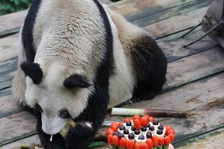 Xin Xing mendapatkan kue yang terbuat dari bambu dan buah-buahan untuk merayakan ulang tahunnya yang ke-36.