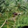 7 Tempat Wisata di Gianyar Bali, Bisa Foto dengan Akar Raksasa