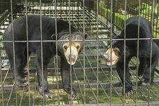 Sedang Memperbaiki Saluran Air, Petani Tiba-tiba Digigit dan Dicakar Beruang hingga Wajahnya Luka Parah
