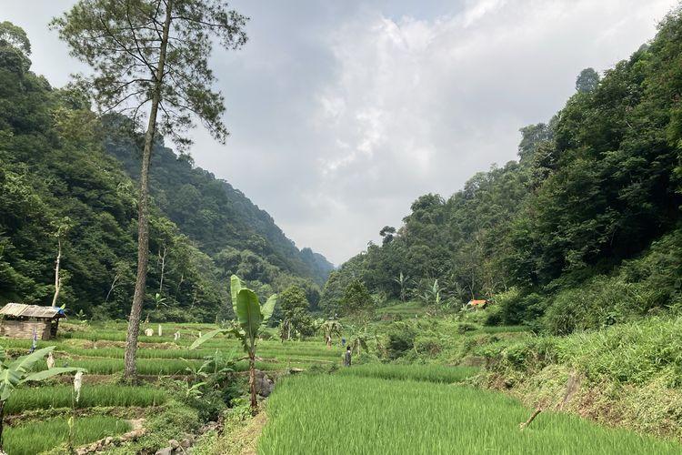 Pemandangan area budi daya lebah madu yang berada di lembah hutan kaki Gunung Pangrango di Desa Bojongmurni, Kecamatan Ciawi, Kabupaten Bogor, Minggu (23/5/2021).