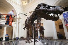 Hari Ini dalam Sejarah: Fosil Lengkap T-Rex Ditemukan