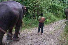 Dua Gajah Liar Berhasil Digiring ke Dalam Hutan