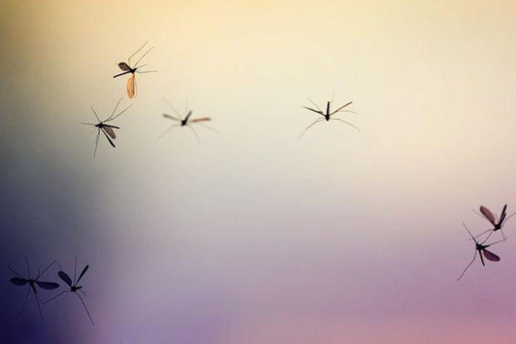 Partikel-partikel plastik menempel di tubuh jentik hingga bertransisi menjadi nyamuk dewasa.