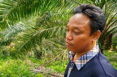 Pohon Kelapa Sawit yang Ditabrak Mobil Hakim PN Medan Jamaludin Kini Tumbang, Ini Cerita Pemilik Kebun