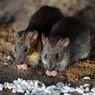 Kompartemen di Motor Matik yang Rawan Jadi Sarang Tikus