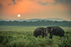 Sri Lanka Buka Lagi Perbatasan untuk Turis Asing