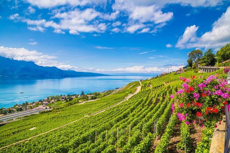 Ilustrasi Swiss - Kebun anggur Lavaux di Montreux yang lokasinya dekat dengan Danau Jenewa, Swiss (SHUTTERSTOCK/canadastock).