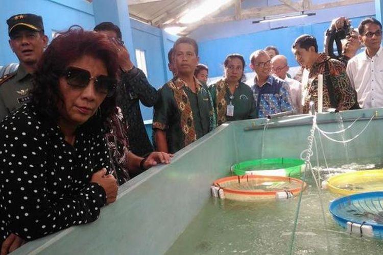 Menteri kelautan dan perikanan Susi Pudjiastuti saat mengunjungi BalaiPerikanan Budidaya Laut (BPBL) Malukudi Desa Waiheru, Jumat (16/12/2016)