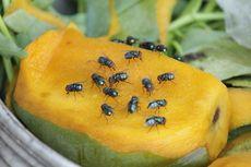 Peternakan Lalat di China Bisa Daur Ulang 3.000 Ton Sampah Setahun