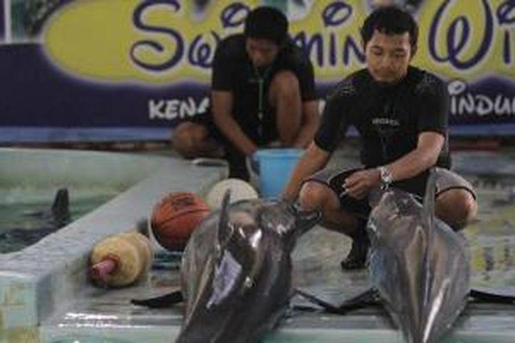 Yasin Adi Baskoro (depan), melatih lumba-lumba di Ocean Dream Samudra, Taman Impian Jaya Ancol, Jakarta Utara, Selasa (9/8/2011).