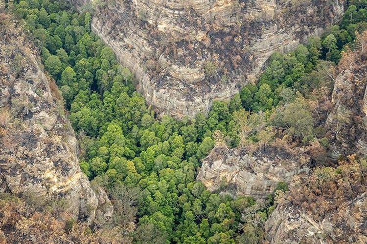 Damkar Australia cegah kebakaran terjadi di hutan pinus purba yang lokasinya dirahasiakan.