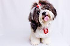 Bolehkah Anjing Mengonsumsi Stroberi? Ini Penjelasannya Menurut Ahli