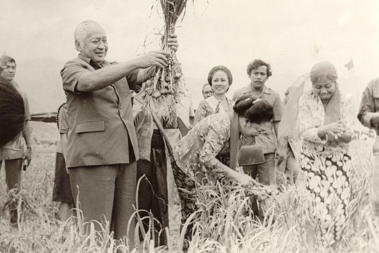 Presiden Soeharto sedang panen bawang putih di Sembalun Lombok tanggal 15/10/1987.