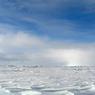 Mengapa di Kutub Utara Tidak Ada Penguin?