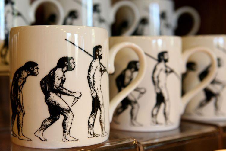 Mug yang menggambarkan evolusi manusia dipajang di rumah naturalis Inggris Charles Darwin, Down House, di Bromley, Kent, 12 Februari 2009. Darwin pindah ke Down House pada 1842. Dia melakukan eksperimen dan penelitian di sana selama 40 tahun. Rumah tersebut dibuka kembali untuk umum pada 13 Februari 2009 sehari setelah ulang tahun ke-200 kelahiran Darwin.