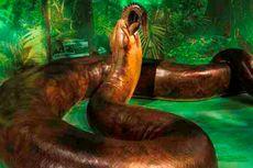 Titanoboa VS Anaconda, Ular Besar dari Wilayah Tropis