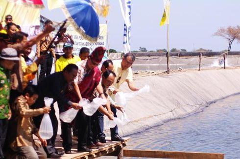Revitalisasi Tambak Udang di NTB, Kementerian KKP Alokasikan Rp 5 Miliar