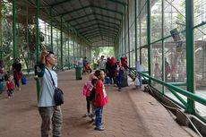 Jakarta PSBB Transisi, Ragunan Buka Kembali Mulai 13 Oktober 2020