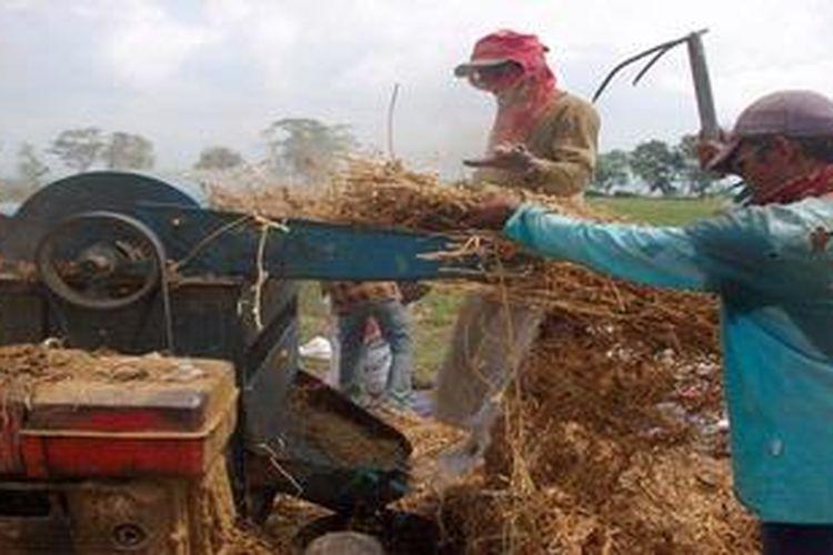 Ilustrasi: Petani di Desa Sukorejo kecamatan Bangsalsari, Jember, Jawa Timur, merontokkan biji kedelai dengan memanfaatkan mesin perontok.