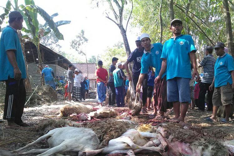 Komunitas muslim di Singapura berkurban ribuan ekor kambing untuk warga di Kabupaten Grobogan, Jawa Tengah, pada hari raya Idul Adha, Jumat (1/9/2017). Sebanyak 1332 ekor kambing tersebut diserahterimakan di Pondok Pesantren Miftahul Huda, Desa Ngroto, Kecamatan Gubug, Grobogan.