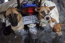 Tak Bisa Larang Perdagangan Daging Anjing, Pemprov DKI hanya Bisa Mengedukasi