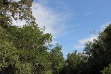 UU Cipta Kerja Hapus Ketentuan soal 30 Persen Kawasan Hutan yang Harus Dipertahankan