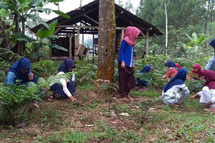 Siswa MTs Pakis Dusun Pesawahan, Desa Gununglurah, Kecamatan Cilongok, Kabupaten Banyumas, Jawa Tengah, membersihkan rumput liar di ladang, Senin (22/7/2019).