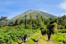 Jalur Pendakian Gunung Sindoro via Kledung Buka Kembali