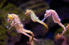 Selain Ikan, Ini 5 Hewan Air yang Dapat Mempercantik Akuarium