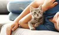 Kucing Peliharaan Lebih Baik Terus di Dalam Rumah atau Tidak?