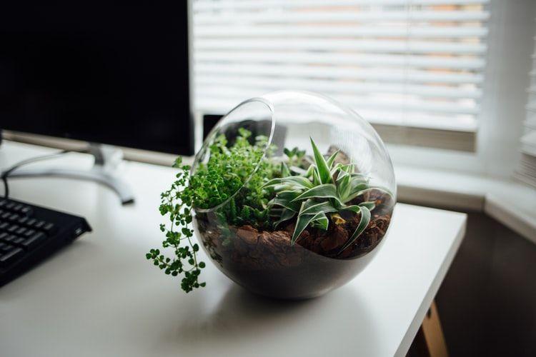 Ilustrasi tanaman terrarium