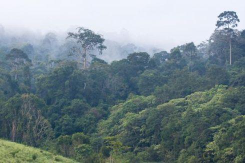 HTI Tak Berkembang, Picu Meluasnya Kerusakan Hutan