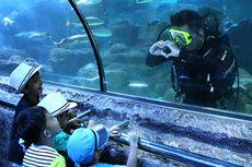 Yuk, Liburan Virtual SeaWorld Ancol Pukul 13.00 WIB Nanti