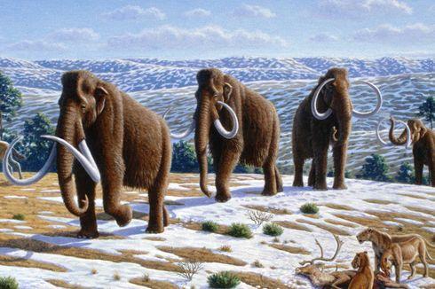 Berpenyakit dan Terisolasi,  Ini Potret Mammoth Terakhir Sebelum Punah