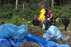 Bandar Narkotika yang Ditangkap Polisi Punya Belasan Hektar Ladang Ganja di Mandailing Natal
